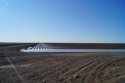 Furrow Irrigation wet 1(72dpi)