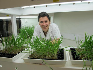 Fungicide resistance discovery calls for urgent action