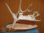 Antler   Mountain Lion & Deer 1a.jpg