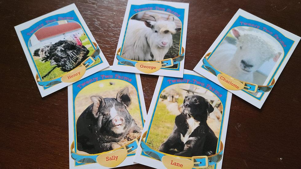 Trading Cards Starter Pack