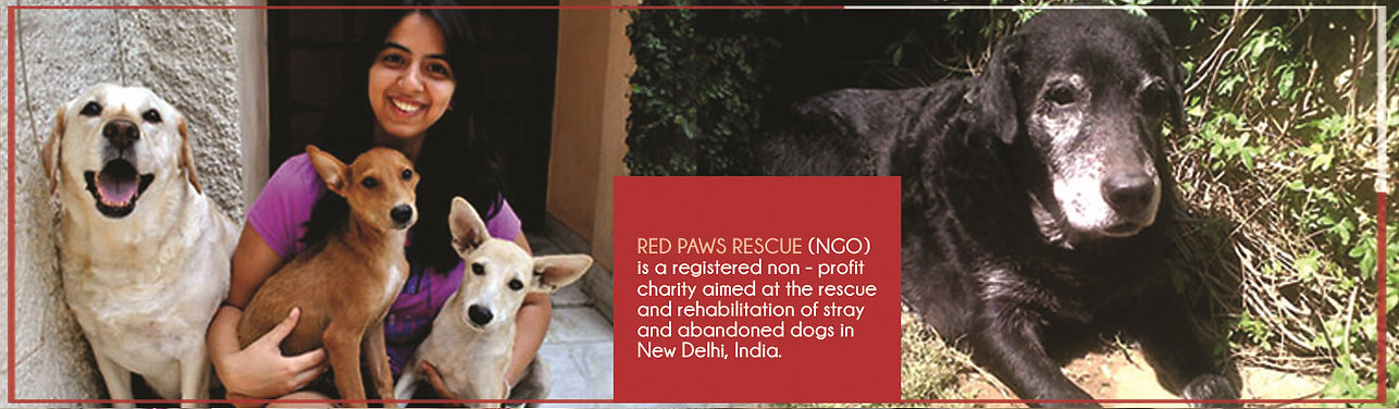 About Red Paws Rescue