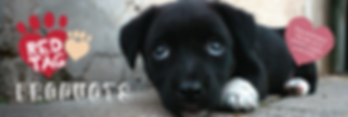 Red-Paws-Shop-Red-Tag-Banner_2100x.png