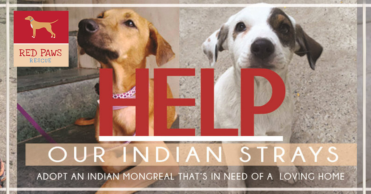 Help Indian Street Dogs | Red Paws Rescue