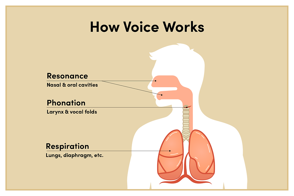 Graphic of how the voice works