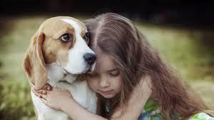 Waarom honden niet van knuffelen houden