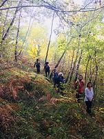 Formation Matières | Anne Expert | Forêt