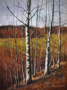 Birchtrees on a steep slope