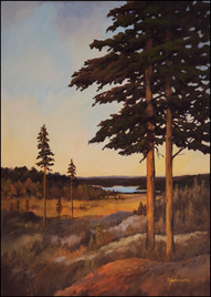 Pines on hill
