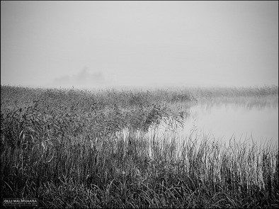 August reeds