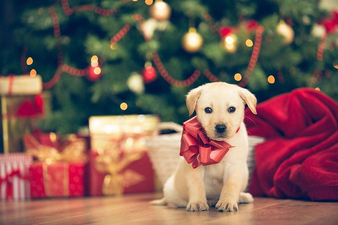 why-pets-make-good-gift-1563986298.jpg