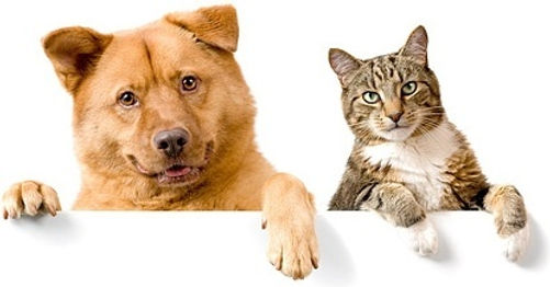 cute_cat_and_dog_picture_6_168799.jpg