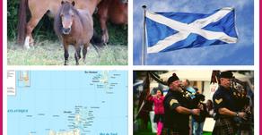 Le Shetland, une race de poney écossaise