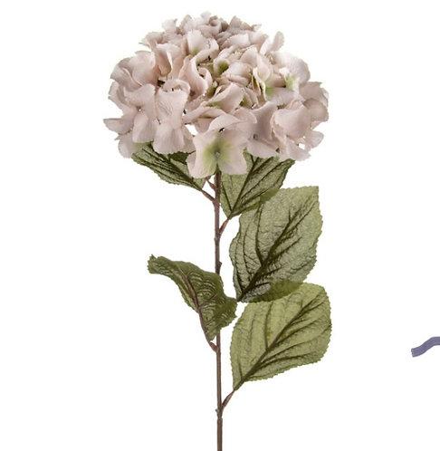 Palest pink/peach Hydrangea