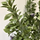 Thumbnail: Aglaia spray flocked green
