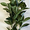 Thumbnail: Large cluster of greenery