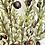 Thumbnail: Olive branch - single stem