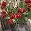 Thumbnail: Artificial spray of raspberries
