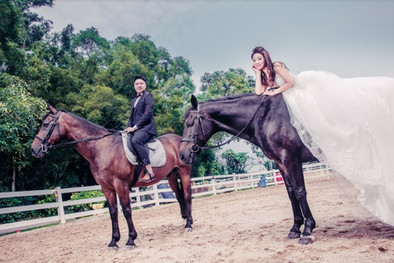 Wedding photo shooting with horses