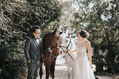 Horse wedding photo in Hong Kong 1