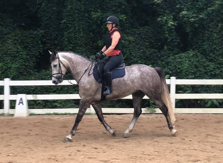 DRESSAGE ANYWHERE IS BACK!!