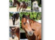 photo frame (a) 2.jpg