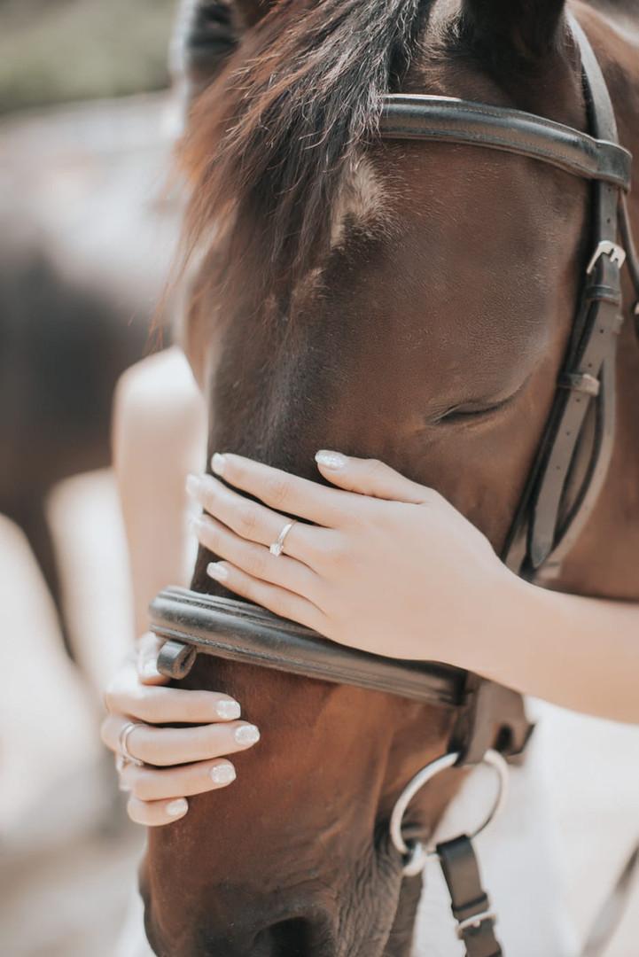 Horse wedding photo in Hong Kong 3