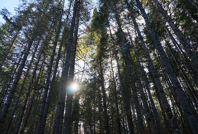 Chalet à louer au Québec | face au lac | 4 saisons Le Cocooning L'Ascension | Promenade en forêt