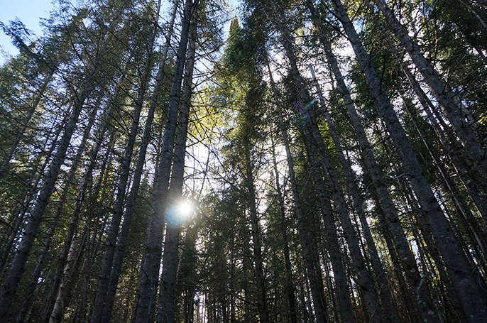 Chalet à louer au Québec   face au lac   4 saisons Le Cocooning L'Ascension   Promenade en forêt