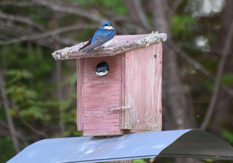 Chalet à louer au Québec   face au lac   4 saisons Le Cocooning L'Ascension   Observatiion des oiseaux