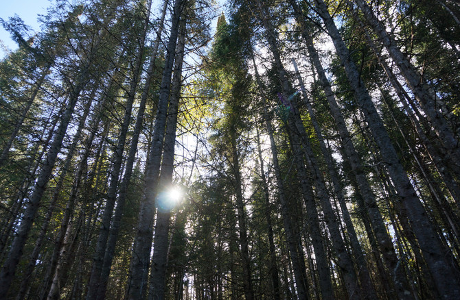 Chalet à louer au Québec   face au lac   4 saisons Le Cocooning L'Ascension   Promenade en fôret