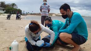 Filhote de peixe-boi é resgatado após encalhar no litoral leste do Ceará