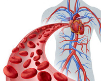 Keep your vascular system healthy!