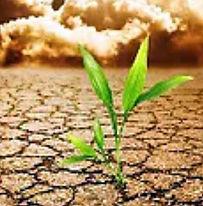 זיהום קרקע