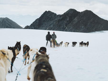 Why You Should Go Dogsled Tours in Alaska
