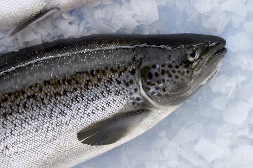 Salmon with Skin (descaled)