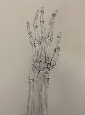 hand bones.jpg