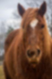 HorsePowerMatthewDill#23.jpg