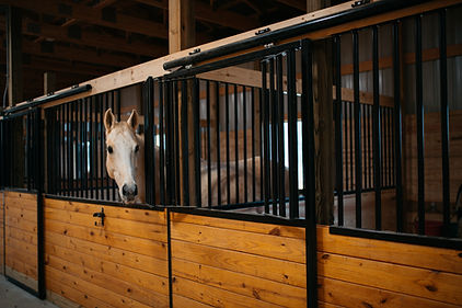 horse-Cody looking out of stall