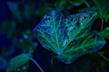 Leaf and rain...wow!, Kleve
