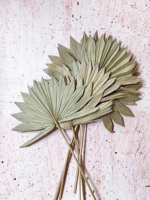 Palm sum natural