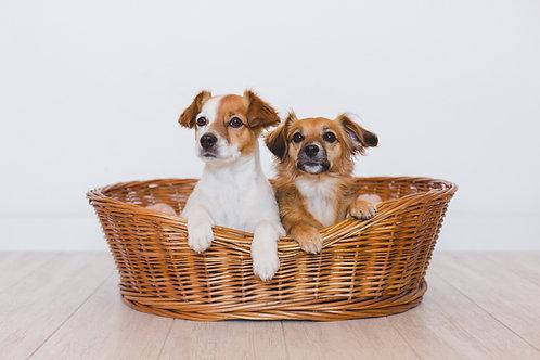 Camas para mascotas / Pet beds