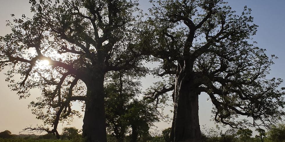65 Years 6500 Trees