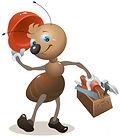 hormiga-carpintero-caja-herramientas-oso