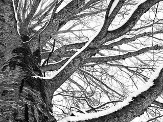 El invierno que no llega