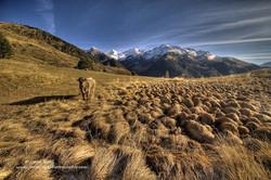 Vaca y montaña