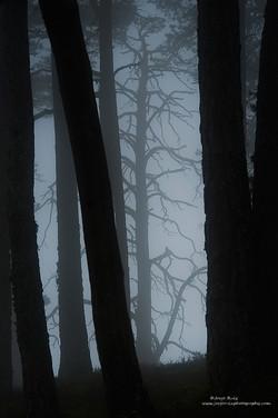 Bosque fantasma
