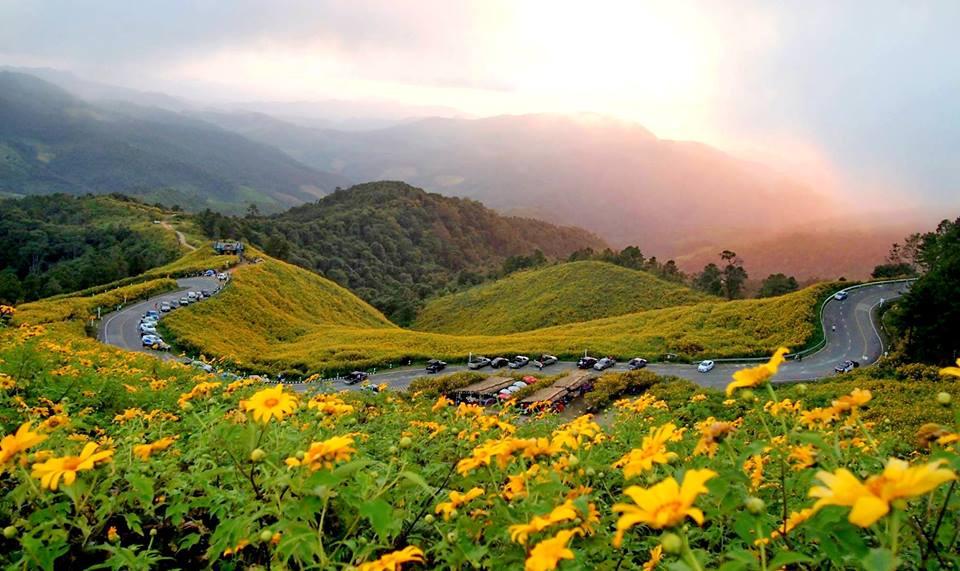 Thung Bua Tong Fields at Doi Mae U Kho