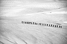 sand-walking-snow-winter-wing-black-and-