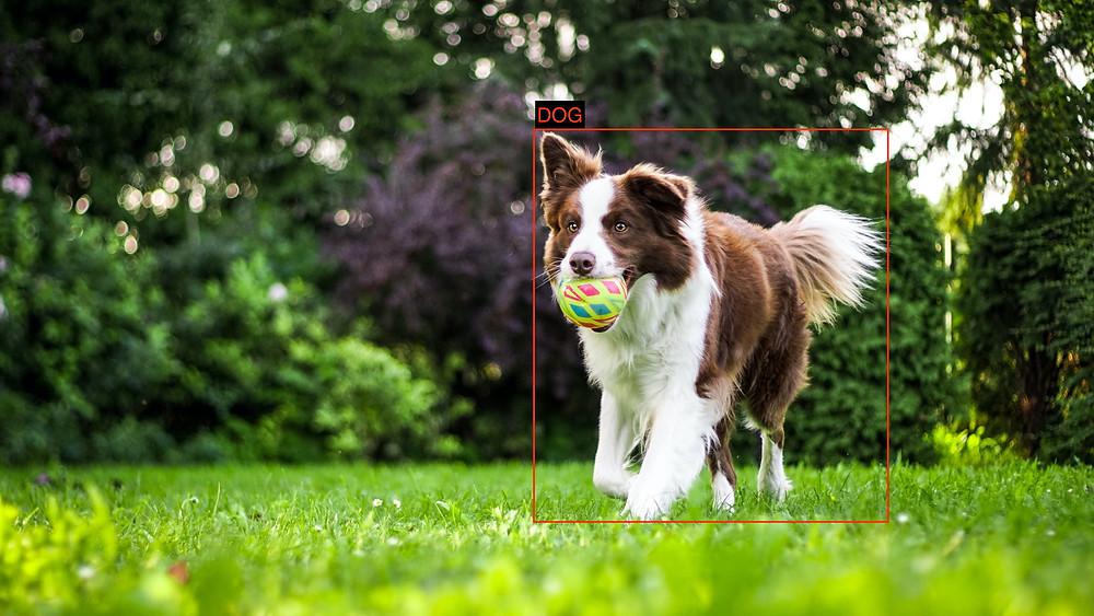 Label on dog image (Original Photo by Anna Dudkova on Unsplash)