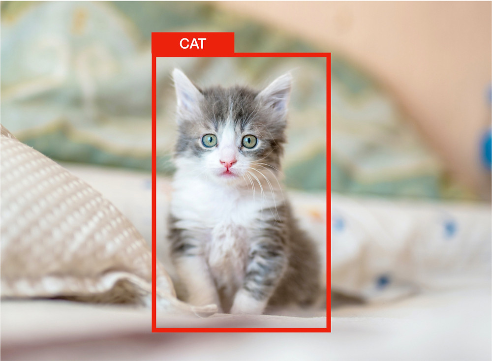 Object detection example detecting a cat (Original cat Photo by Kote Puerto on Unsplash)